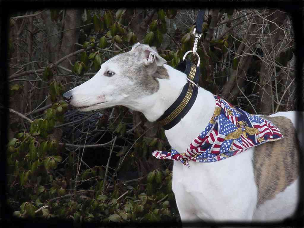 Greyhound Data